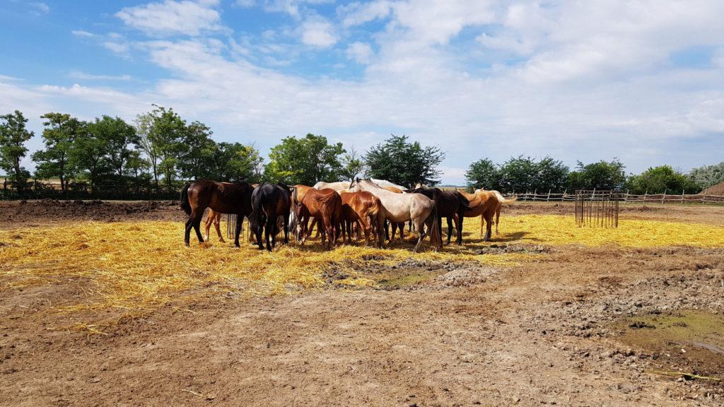 Visite d'une ferme à Dunapataj en Hongrie